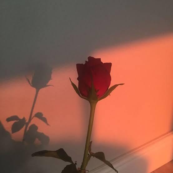 Hangi çiçeğin kokusunu hangisinin görünüşünü seviyorsun