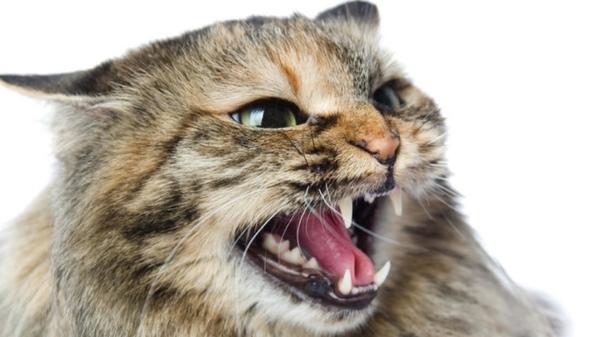 Jak wyglądasz gdy jesteś wściekła