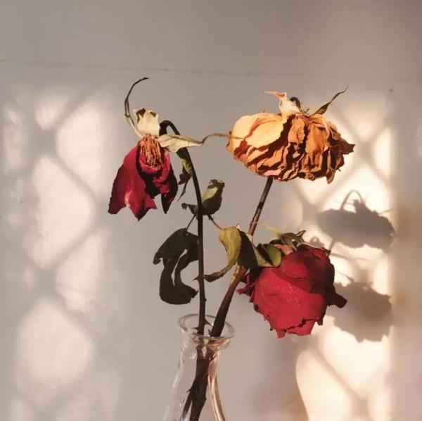 Çiçek soldu vazonun bir önemi kalmadı