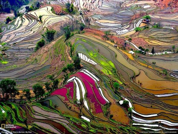 ليست لوحات مرسومة وانما مدرجات حقول الرز في الصين