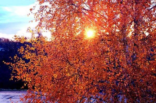 Что ты любишь в осени