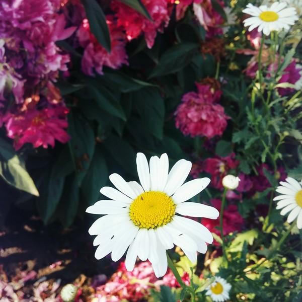 Какие цветочки любишь