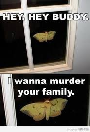 я наблюдаю за тобой изза окна