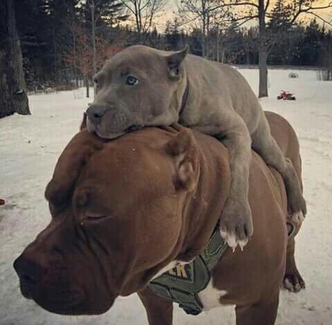 Prefieres perros o gatos