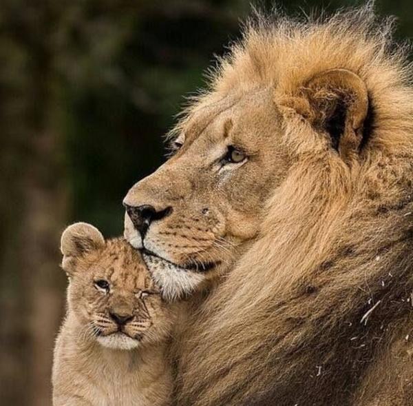 أكثر حيوان بري تحبه