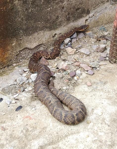 Вы разбираетесь в змеях обитающих в вашей местности Какие из них самые ядовитые