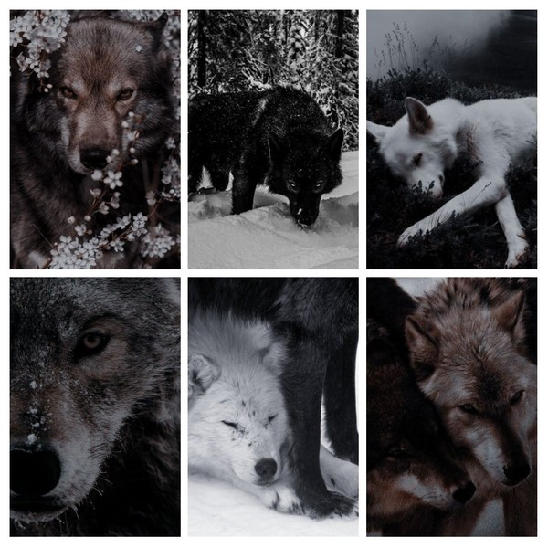 пиарсундук для lolatursunova  тема  волки