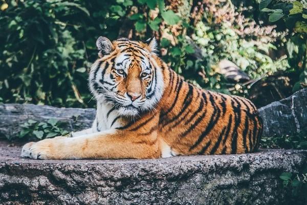 Aký máš názor na zoologické záhrady