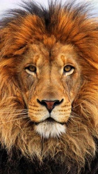 Poste ein Foto des deiner Meinung nach schönsten Tieres