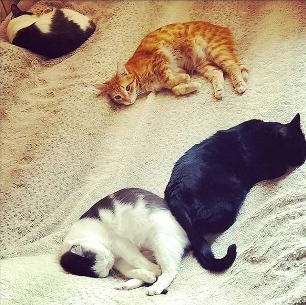 Сегодня отмечается Международный день кошек Опубликуй гифку с котиком
