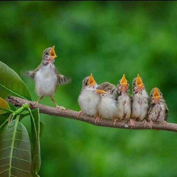 Доброе утро   Просыпаться под пение птиц и яркий свет ласкового солнышка  это