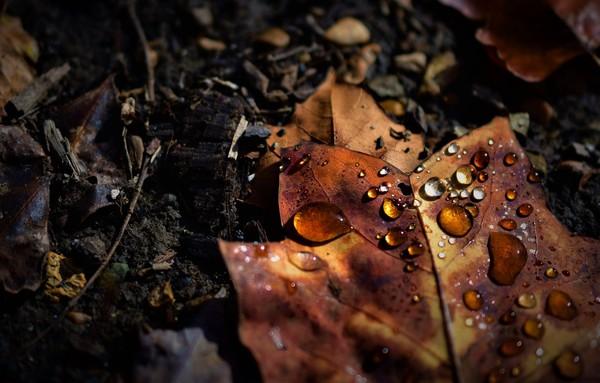 ℬℊ  осень любите ли вы осеньчем обычно любите заниматься осеньюкак бы вы хотели