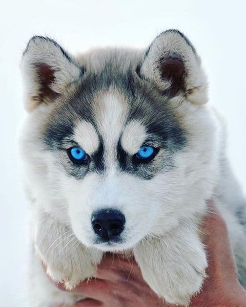 Quale razza di cane ti piace di più
