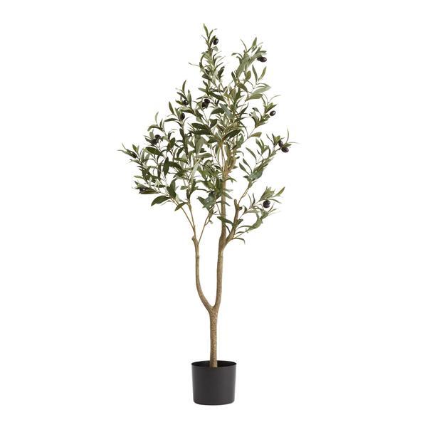 Cây olive màu trắng  Cửu Nguyệt Hi 2