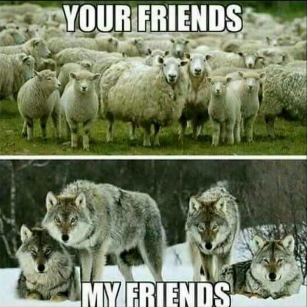 Hast du viele Freunde