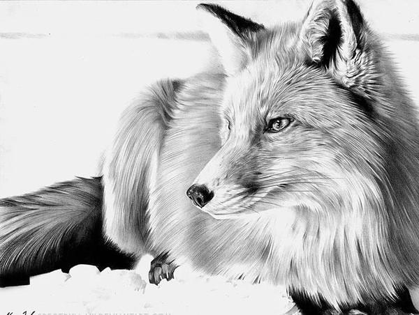 Нравятся ли вам лисички