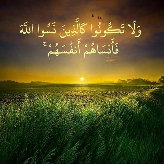 رتلوا ففي القرآن فرج دائم والله يجبر في الفؤاد جراحه
