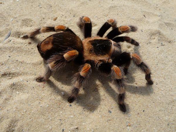 54 Самое страшное животное или насекомое для тебя