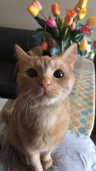 Hallo liebe Haustierbesitzer Könnt ihr mal bitte ein Foto eures Lieblingseurer