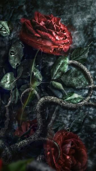 Любишь розы