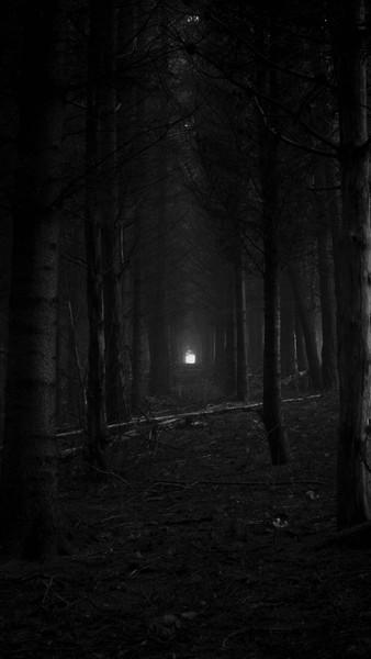 расскажи про  лес