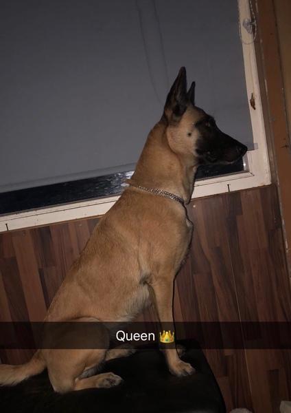Zeig ein Foto von deinem Haustier