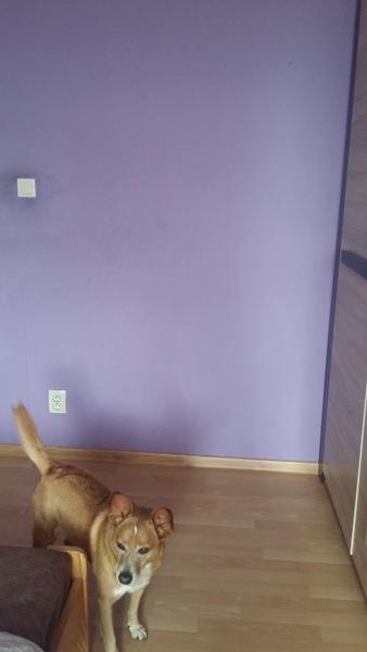 Masz białe ściany w pokoju czy jakie