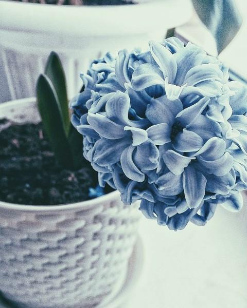 КД Прикрепите вашу любимую картинку  где есть голубой или синий цвет С чем он у
