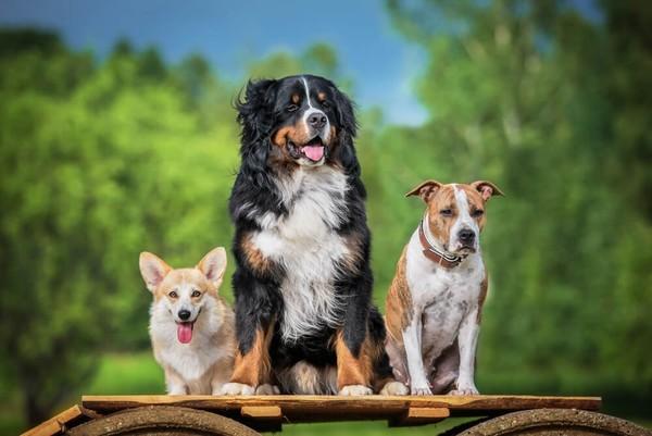 Как ты думаешь характер собаки зависит от породы