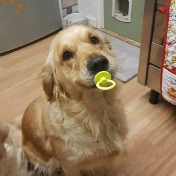 Crezi că adevărații prieteni ai omului sunt câinii