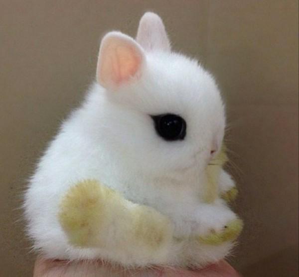 Мне какой уже день  а я сплю только днём  снится белый кролик Как думаешь это к