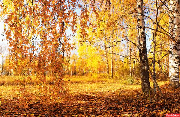 Тебе нравится осень Почему