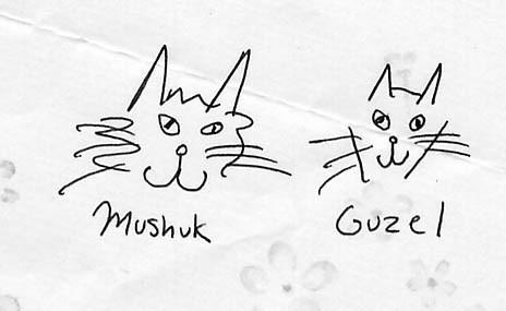 Придумайте имя коту Я придумал кексик