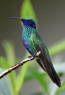 Тема животные  ПодТема колибри  Прикрепи к ответу фоторисунокгиф