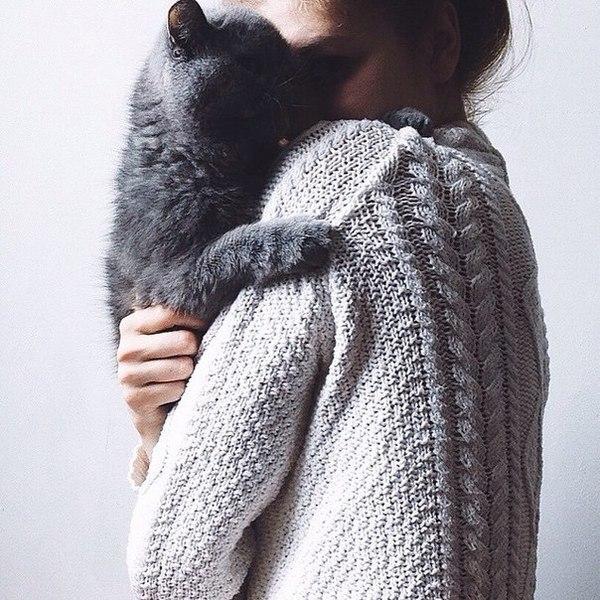 Какая порода кошек нравится