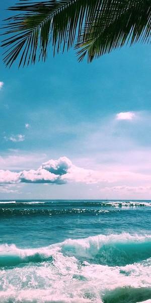 Сохра на тему море