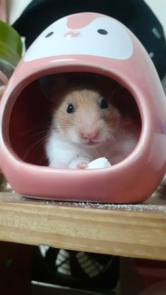 Ui vô tình lướt thấy chiếc ask này 3 Ask  hình chú chuột nhỏ của cậu quá ư dễ