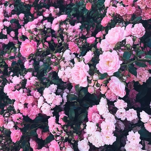 Счастлив тот кто может разглядеть красоту в обычных вещах там где другие ничего