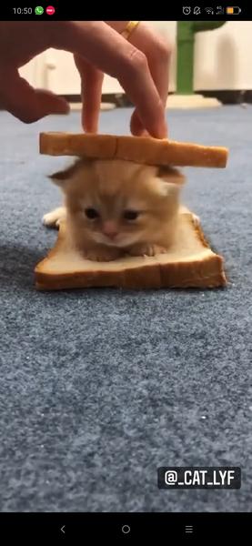 Do funny kitty videos make you smile
