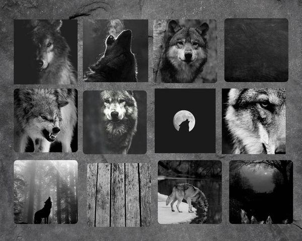 осенний сундук  волки