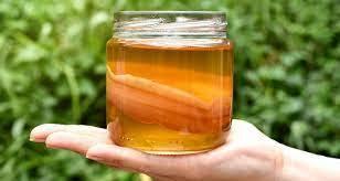Чи знаєш ти що таке чайний гриб