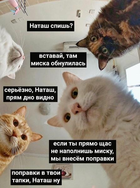 О чем мечтает кот