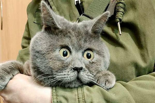 Рассказ котарассказанный котом
