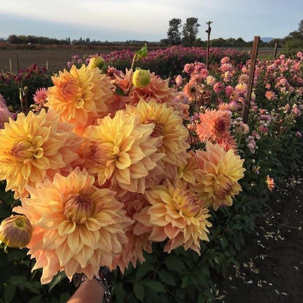 Какие твои любимые цветы
