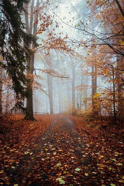 собственный рассказ   грусть тучи осень мысли музыка любимой быть одной по краю