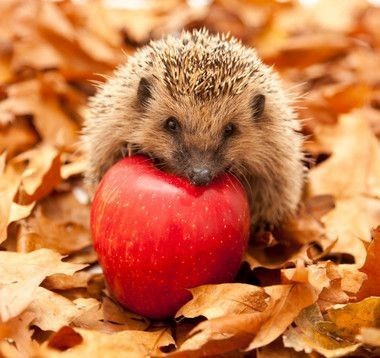кд  ёжики и осень