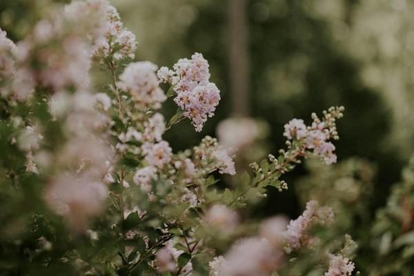 Так хочу целыми днями гулять по улицам видя цветение вишни и сирени слышать