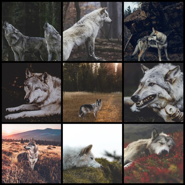 Пиарсундук на 9 ячеек на  на тему волки от администратора Волчонок