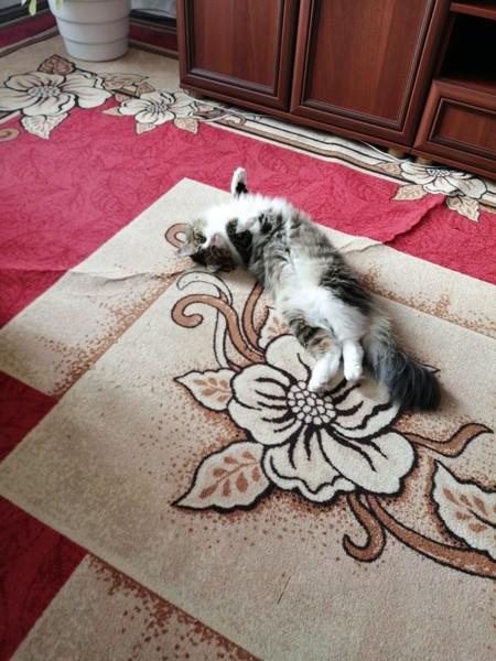 Как твой кот поживает
