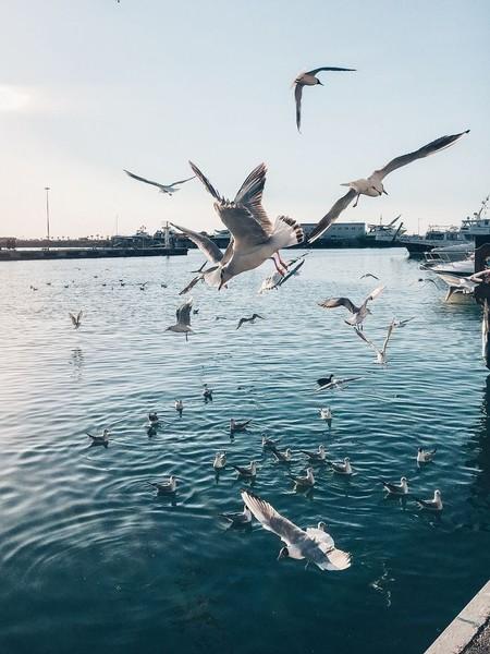 кд  море и птицы